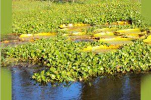 Procesos de licenciamiento ambiental en los humedales del Paraná