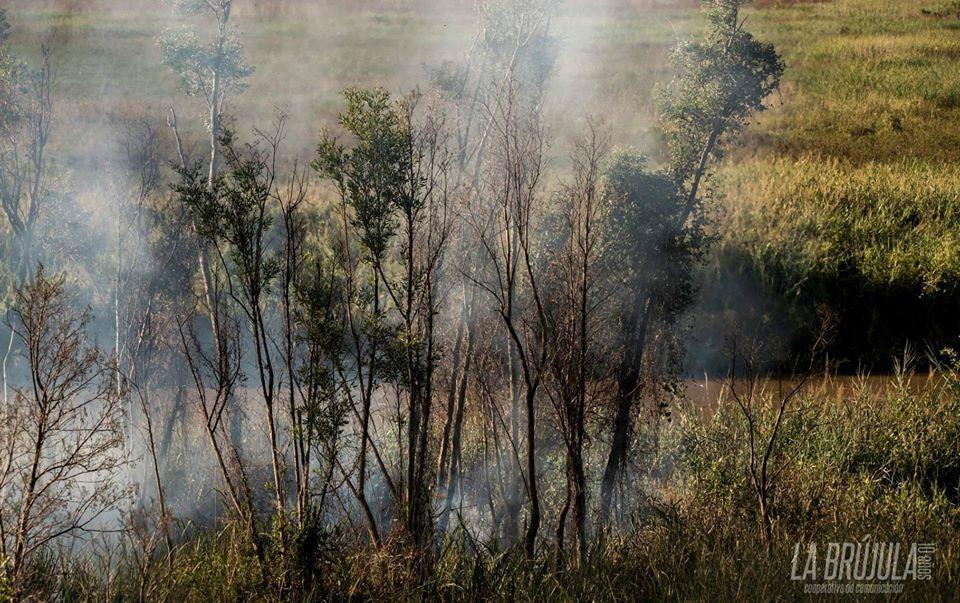 Incendios en islas: Degradación de ambientes y zoonosis