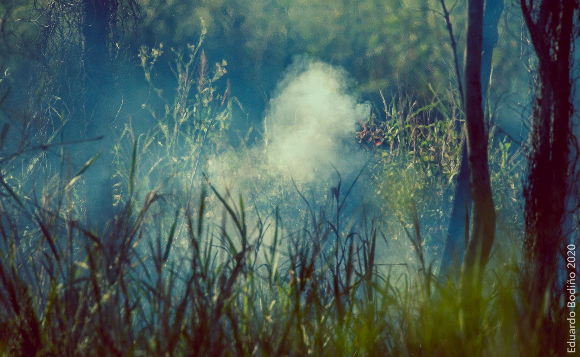 El Delta en llamas: Taller Ecologista en los medios