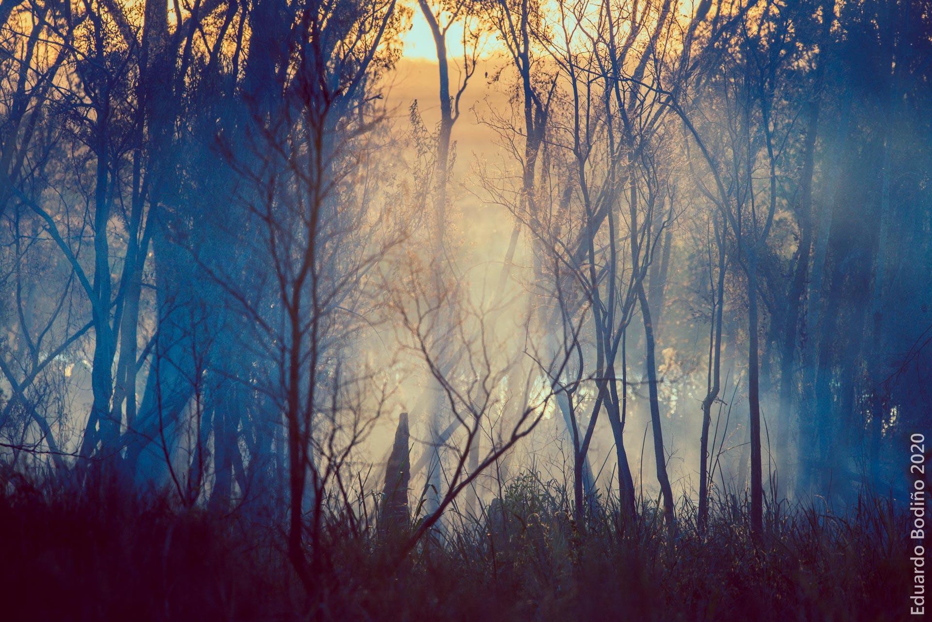 El Delta en llamas: Reclamo por acciones concretas y coordinadas